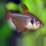 red-phantom-online-rad-aquasystem 30