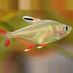 rosi-tetra-online-rad-aquasystem 25